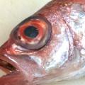 eyecatch4