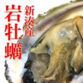 富山の岩牡蠣